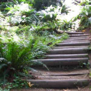 pathway-ferns